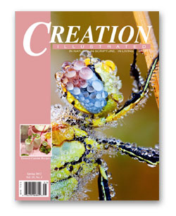 The Saturday Morning Review–Creation Illustrated